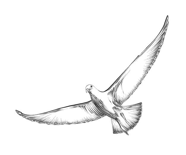 Na białym tle ręcznie rysowane grawerowanie szkic gołębia w kolorze czarnym.