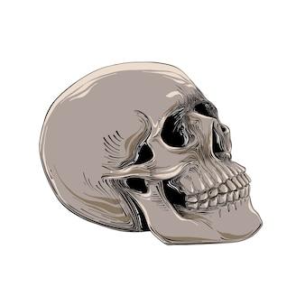 Na białym tle ręcznie rysowane szkic czaszki.