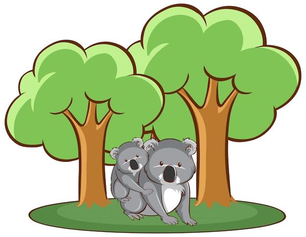 Na białym tle ręcznie rysowane z koala w lesie
