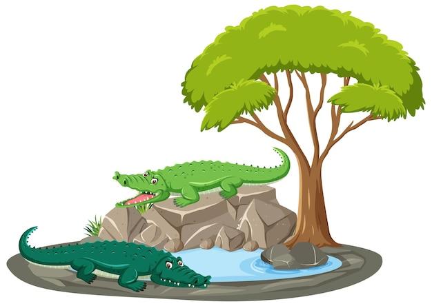 Na białym tle scena z krokodylem wokół stawu