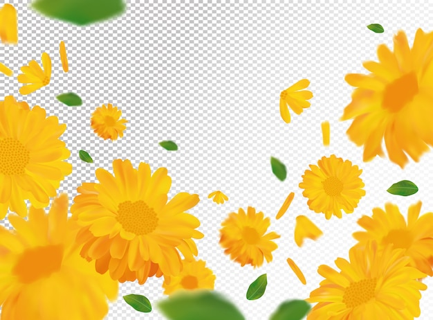 Nagietek z zielonym liściem. żółty kwiat nagietka w ruchu. piękna przestrzeń nagietka. nagietek z bliska. spadający kwiat nagietka.