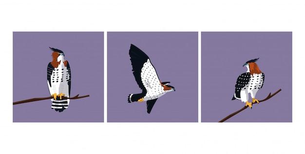 Nakładanie jastrzębi ptaków o różnych pozach