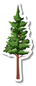 Naklejka wiecznie zielone drzewo na białym tle