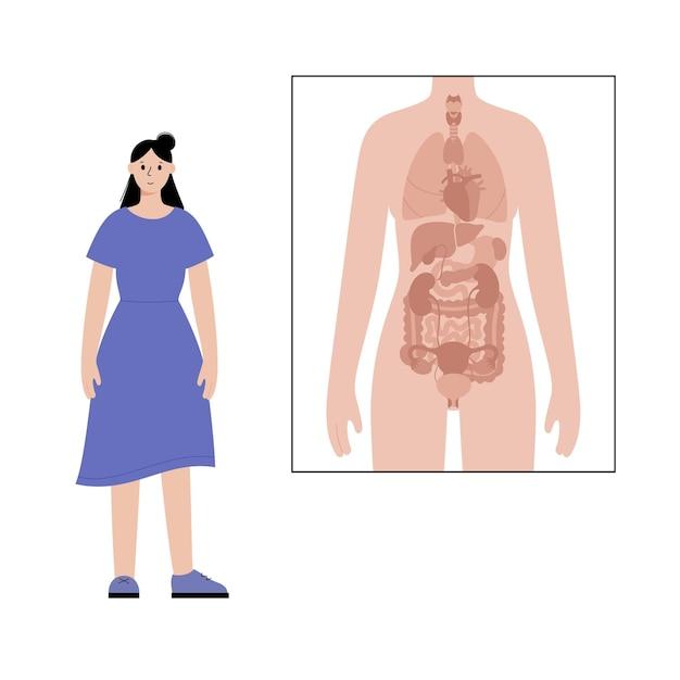 Narządy wewnętrzne w anatomicznych plakatach ludzkiego ciała i postać dorosłej kobiety obok.