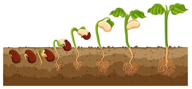 Nasiona rosnące w drzewo