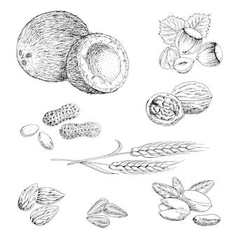Naszkicowane orzechy, fasola, nasiona i pszenica z orzeszkami ziemnymi, kokosem, orzechami laskowymi i orzechami włoskimi, migdałami i pistacjami, pestkami słonecznika i kłosami pszenicy. rolnictwo, przekąska wegetariańska, wykorzystanie projektu książki kucharskiej