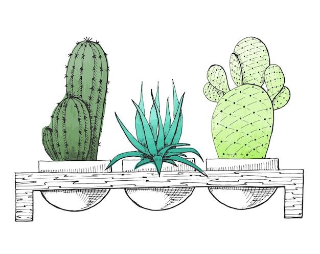 Naszkicuj trzy sukulenty w doniczkach na drewnianym stojaku. stylizowana akwarela. ilustracja wektorowa.