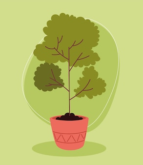 Natura drzewa doniczkowego