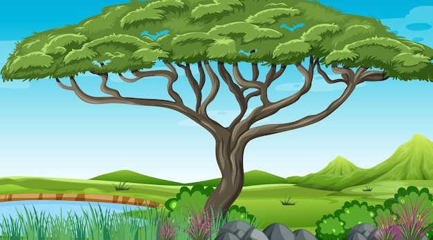 Natura na zewnątrz lasu