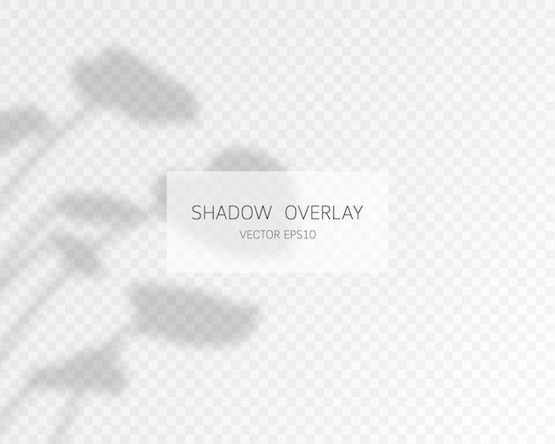 Naturalne cienie na przezroczystym tle