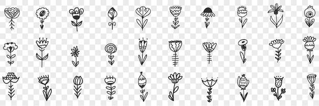 Naturalne kwiaty wzór doodle zestaw ilustracji