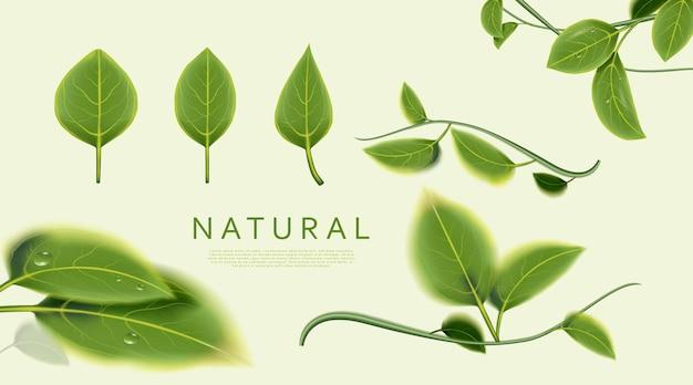 Naturalne liście na zielonej powierzchni