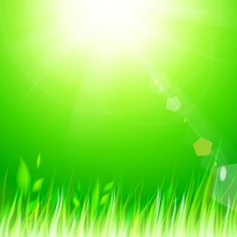 Naturalne słoneczne tło.