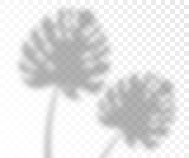 Naturalny efekt cieni oświetlenia nakładki liści monstera, realistyczny na przezroczystym tle. fotorealistyczny szablon liści tropikalnych.