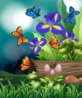 Natury scena z motylem i irysowymi kwiatami