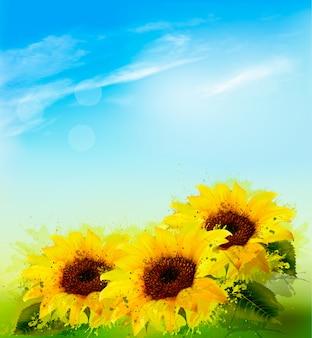 Natury tło z słonecznikami i niebieskim niebem.