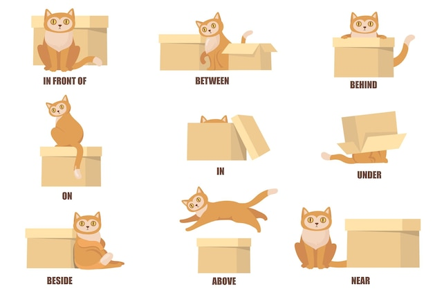 Nauka przyimków za pomocą płaskiego zestawu kota i pudełka