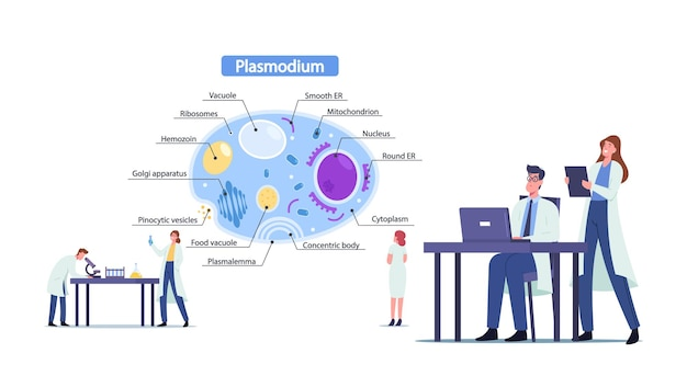 Naukowcy płci męskiej i żeńskiej uczą się pasożytów plasmodium. mały lekarz mikrobiologii w ogromnych infografikach prezentujących widok wnętrza komórki ze wszystkimi częściami. ilustracja wektorowa kreskówka ludzie