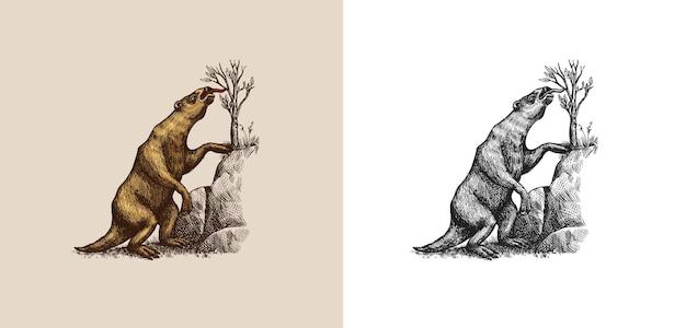 Naziemne lenistwo lub megatheriidae prehistoryczne ssaki wymarłe zwierzę vintage retro ilustracji wektorowych