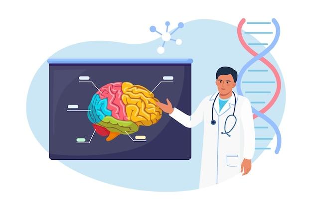 Neurochirurg, neurolog bada mózg. lekarz wskazując na szyld medyczny z ludzkiego mózgu. lekarz lub naukowiec nauczający o alzheimerze, chorobie otępiennej, chorobie psychicznej, neurologicznej