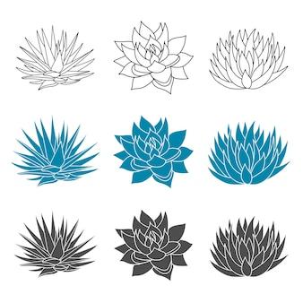 Niebieska agawa zestaw roślin w płaskim stylu syrop z agawy do robienia tequili sylwetka soczysta ręcznie rysowane