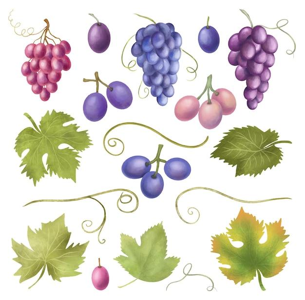 Niebieskie i fioletowe winogrona i liście winogron clipart ręcznie rysowane na białym tle ilustracja