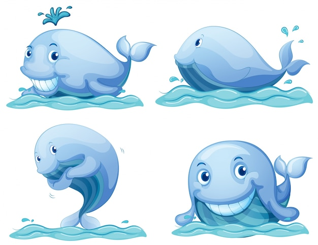 Niebieskie wieloryby
