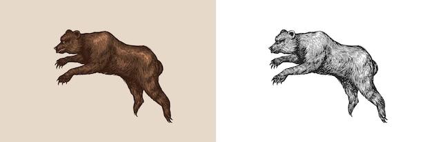 Niedźwiedź jaskiniowy wymarły brązowy zwierzę vintage retro wektor ilustracja doodle styl ręcznie rysowane grawerowane