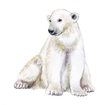 Niedźwiedź polarny na białym tle. akwarela