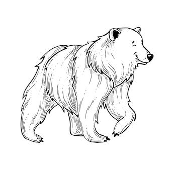 Niedźwiedź.