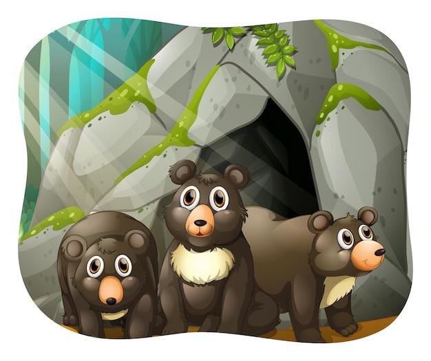 Niedźwiedzie grizzly żyjące w jaskini