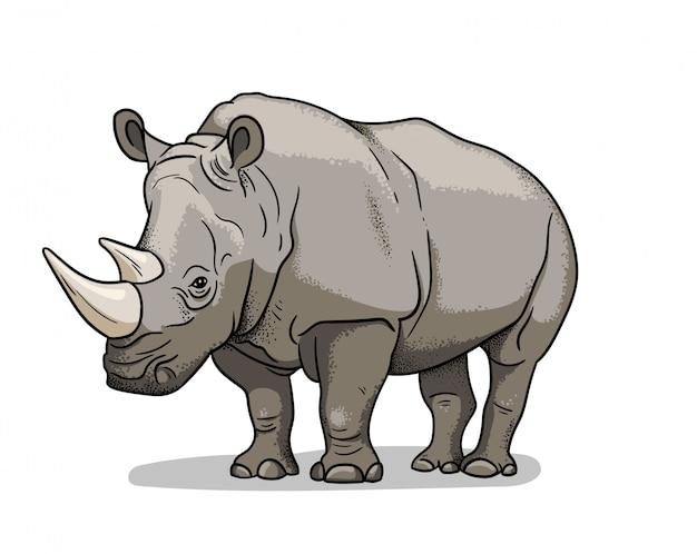 Nosorożec afrykański sawanny na białym tle w stylu cartoon. edukacyjna ilustracja zoologii, obraz do kolorowania.