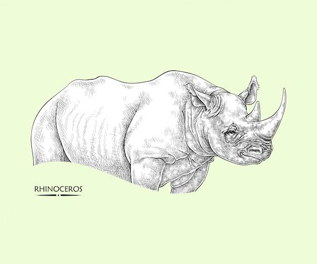 Nosorożec, ilustracja zwierząt