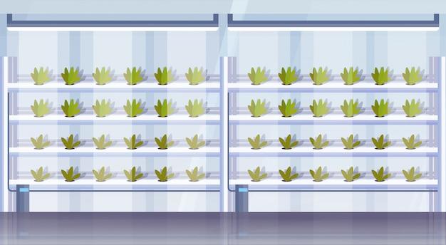 Nowoczesne organiczne hydroponicznych pionowe gospodarstwo rolne wnętrze rolnictwo inteligentny system rolnictwa koncepcja zielone rośliny rosnące przemysł poziome