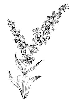 Nowoczesne plakaty z kwiatami lawendy w modnych kolorach. streszczenie ręcznie rysunek kwiaty i elementy geometryczne i obrysy, liście i kwiaty.