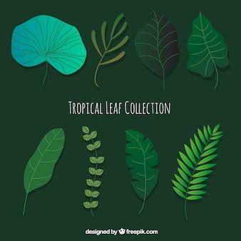 Nowoczesny zestaw wyciągnąć rękę tropikalny liści