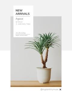 Nowości szablon wektor z agawą