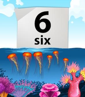 Numer sześć i sześć meduz pod wodą