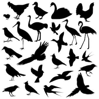 Obraz ptaków, różne rodzaje ptaków
