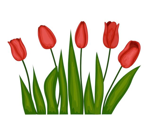 Obraz trzech różowych tulipanów na białym tle.