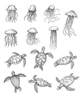 Ocean meduzy i żółwie morskie szkic, zwierzęta morskie wektor ręcznie rysowane ikony. morskie i oceaniczne podwodne gady, żółwie i meduzy w ołówkowym szkicu wylęgowym