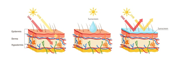 Ochrona przed promieniowaniem uv. balsam przeciwsłoneczny chroni ludzką skórę przed promieniowaniem uva, uvbb