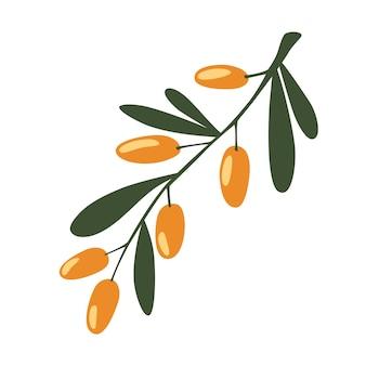 Oddział jagody rokitnika. pojęcie realistycznego obrazu roślin leczniczych, ziół.