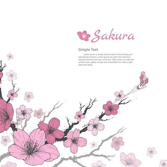 Oddział sakura z słodkie różowe kwiaty na białym tle.