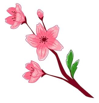 Oddział z kwiatami w kwiat, na białym tle kwiat wiśni. sakura kwitnąca, sezon hanami w krajach orientalnych
