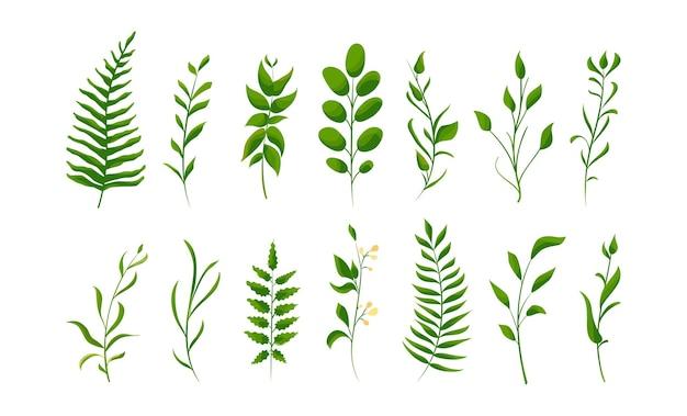 Odosobnione naturalne liście. duży zestaw kolekcji zielonej paproci leśnej, tropikalnej zieleni.