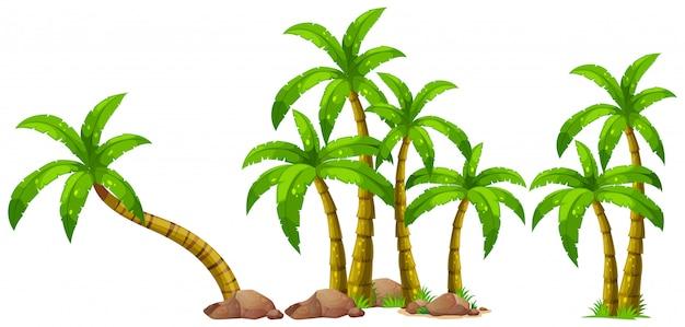 Odosobniony drzewko palmowe na białym tle