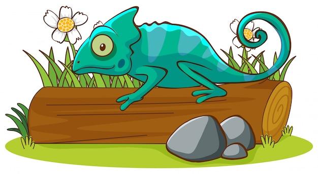 Odosobniony obrazek kameleon w ogródzie