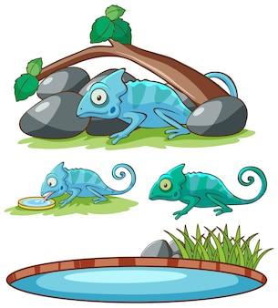 Odosobniony obrazek kameleon