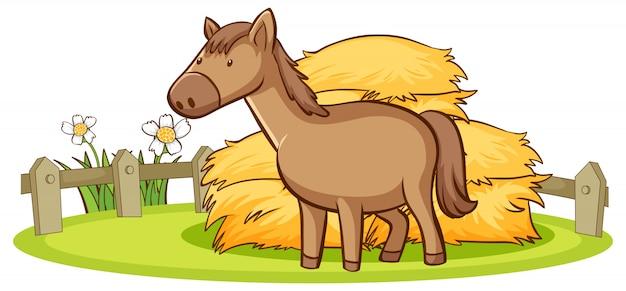 Odosobniony obrazek koń na gospodarstwie rolnym